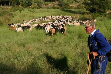 Herder_Spanje