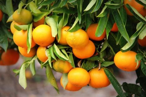 Sinaasappels-Spanje