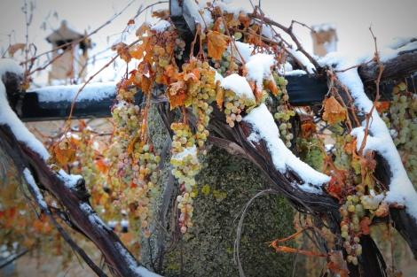Druiven-in-de-sneeuw