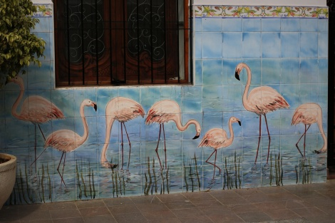 Calpe-flamingo
