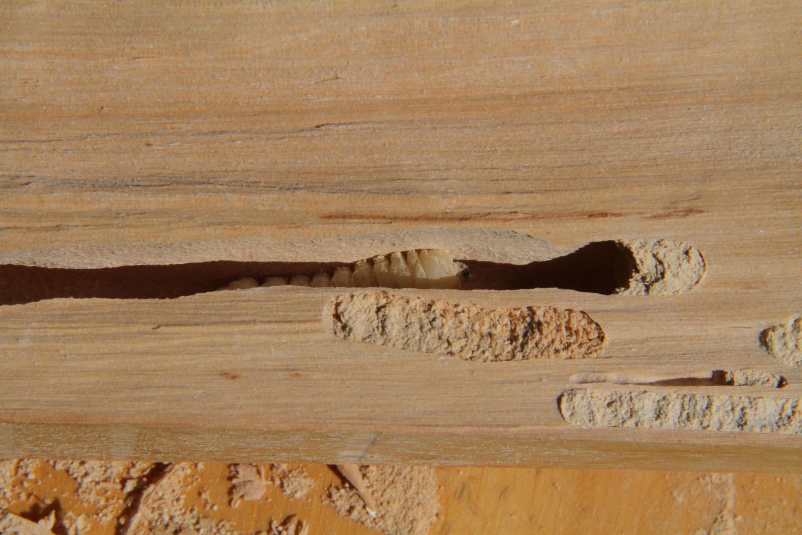 Boktor en hout in Spanje    Wonen in Spanje