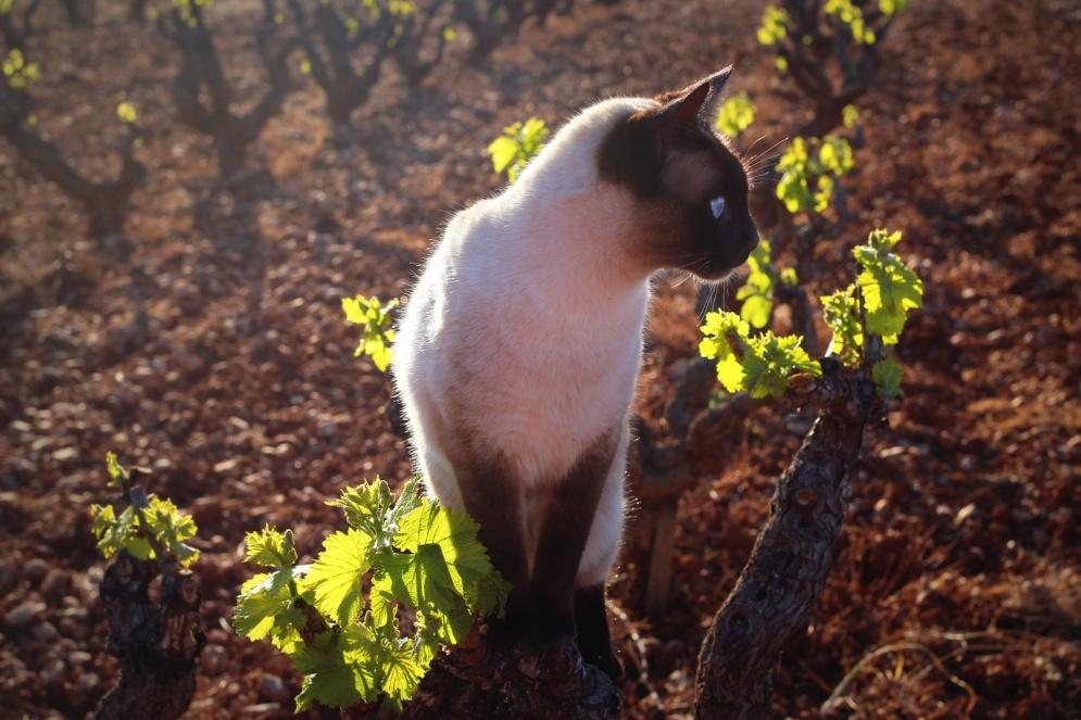 Druivenblaadjes-Lulu