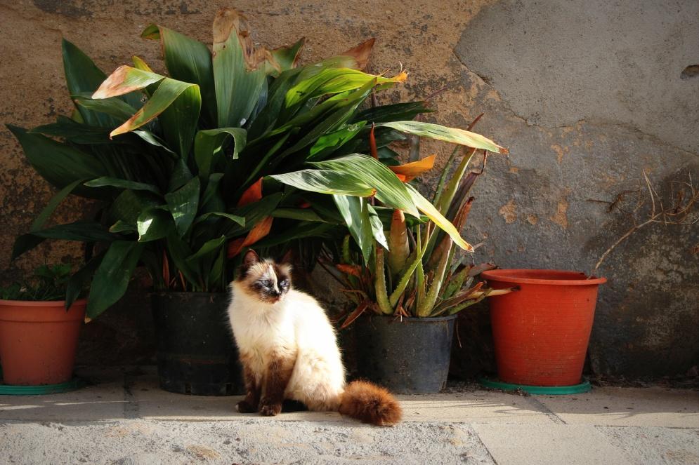 Extremadura-kat