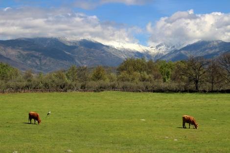Sierra-de-Gredos