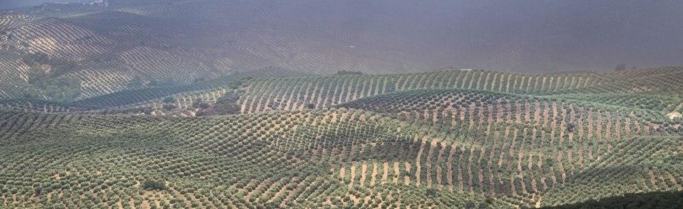 olijvenpanorama