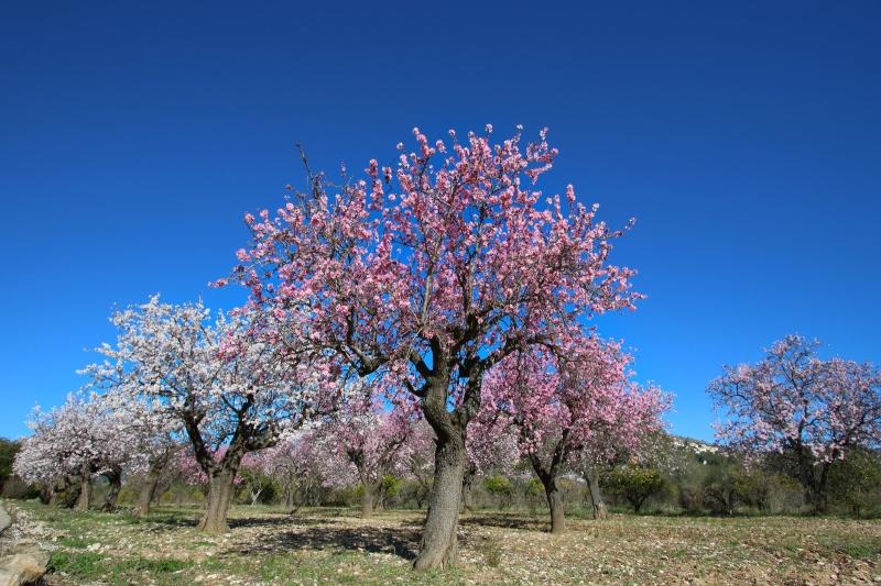 Alcalali-februari