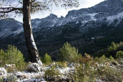 Bernia-met-sneeuw