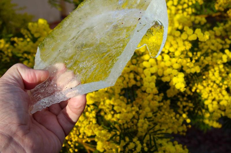 mimosa-en-ijs