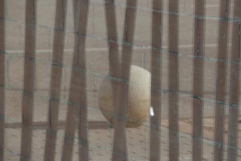 Lijnen-en-reflectie