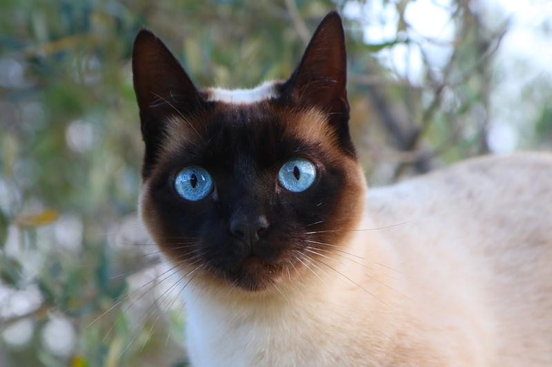 Lulu-ogen