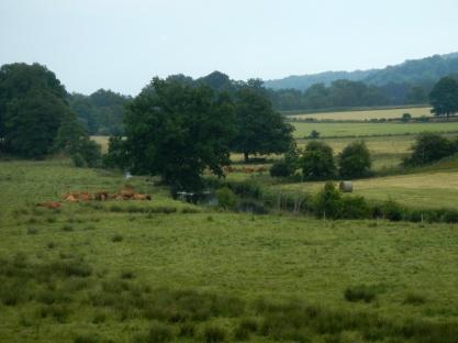 Limousinkoeien