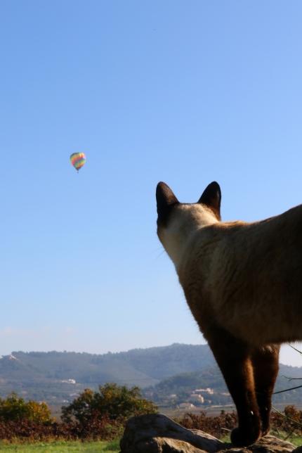 Lulu-ballon
