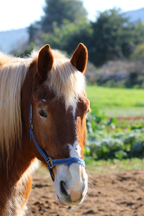 Paard-Xalo