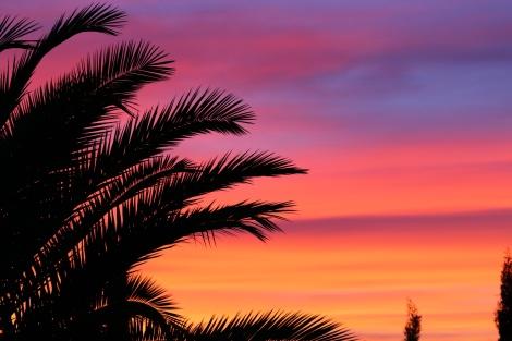 palm-spanje