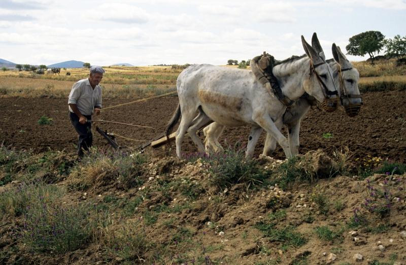 ploegen-ezels
